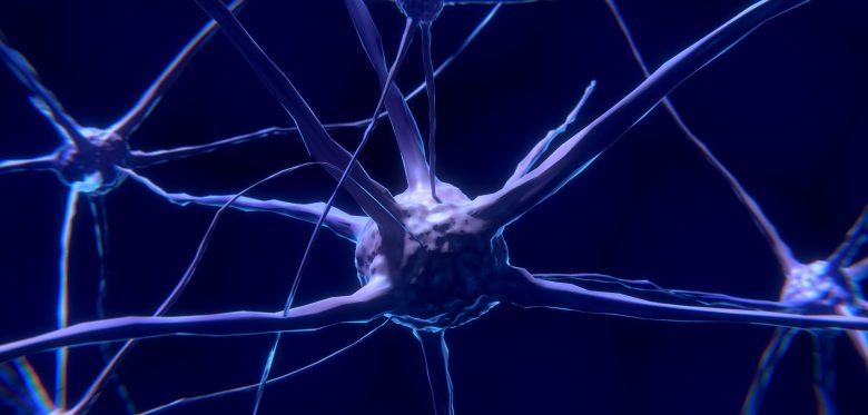 Super-hubs: Neuronale Verbíndung